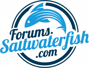 Saltwater Fish Forums