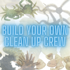 Build Your Own Clean Up Crew