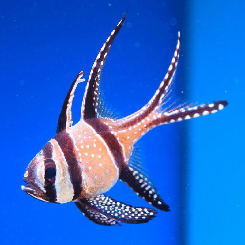 www.oceansgarden.com